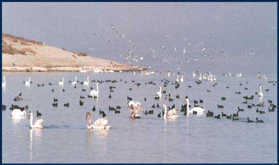 Αμύνταιο Λιμνη Αγιου